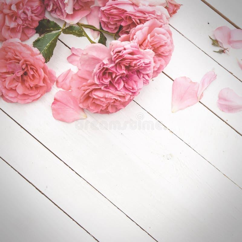 Romantiska rosa rosor på vit träbakgrund fotografering för bildbyråer