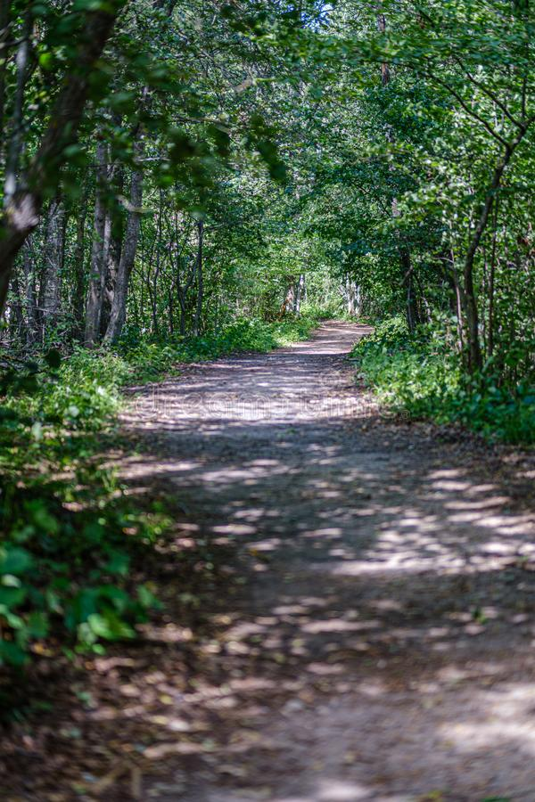 romantyczna żwir droga gruntowa w wsi w lato zieleni wieczór obraz royalty free