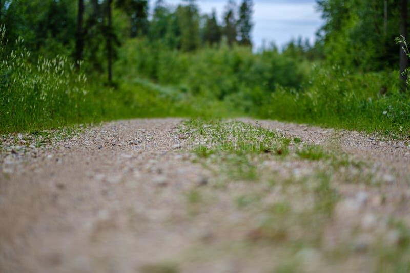romantyczna żwir droga gruntowa w wsi w lato zieleni wieczór zdjęcie stock