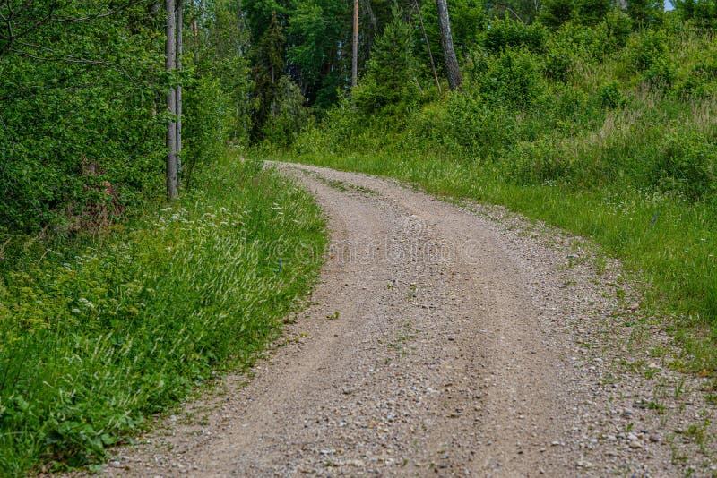 romantyczna żwir droga gruntowa w wsi w lato zieleni wieczór zdjęcia royalty free