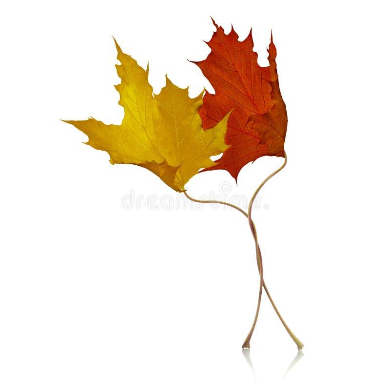 Download Romantyczna jesień zdjęcie stock. Obraz złożonej z flirtowanie - 57673612