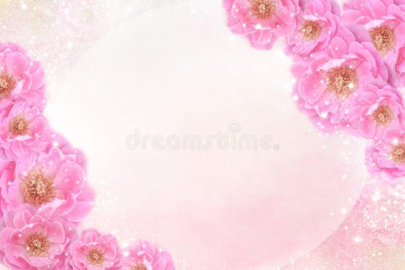 Romantyczne różowe róże kwitną granicę na miękkim błyskotliwości tle dla valentine lub ślubną kartę w pastelowym brzmieniu zdjęcia royalty free