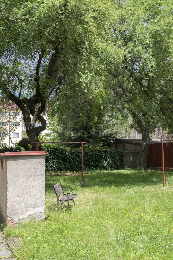 Romantyczny kąt w dzikim ogródzie, piękny wczesnego lata greenery, gęsta trawa, dziki zielony gazon w świetle słonecznym zdjęcie royalty free