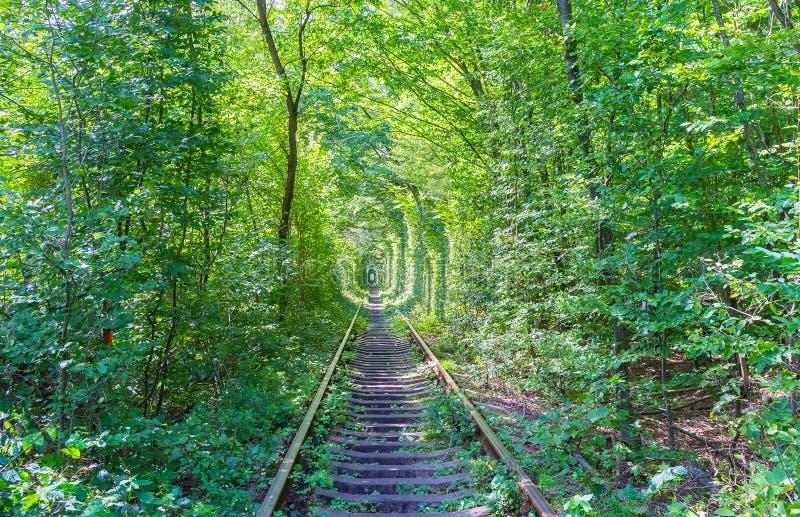 Romantyczny miejsce w lesie obrazy royalty free