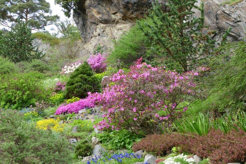 Romantyczny wiosny rockery zdjęcia stock