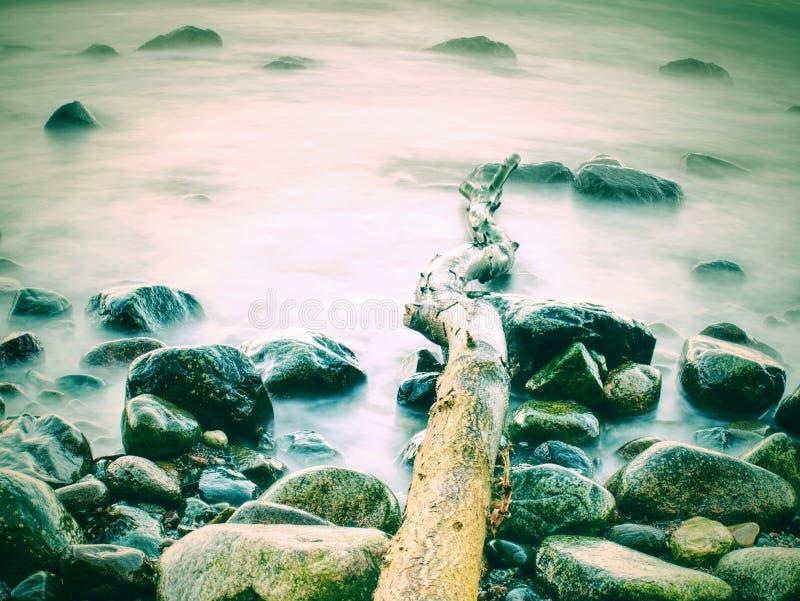 Romantyczny zmierzch przy morzem Kamienista plaża z bended drzewem Estonia baltic Tallinn somethere blisko morza obraz stock