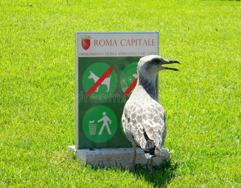 Rome huvudstaden och fågeln i sommar arkivfoton