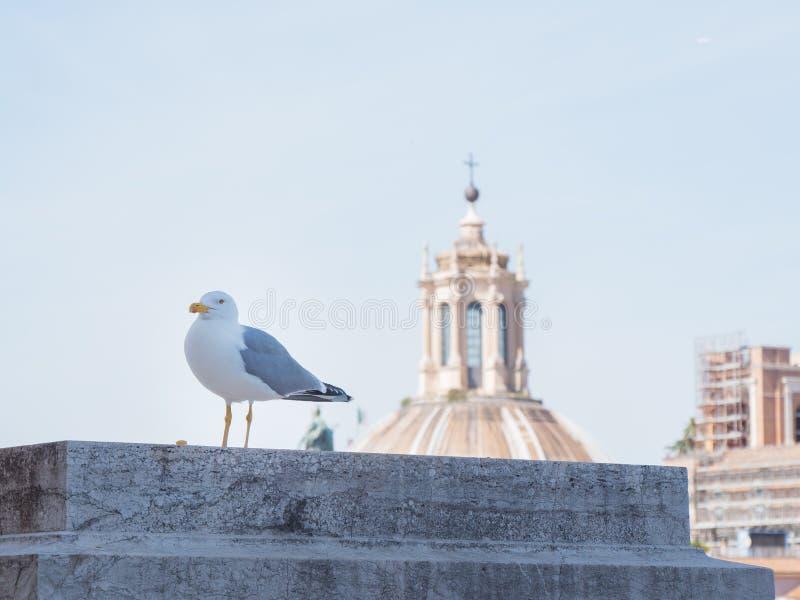 Rome, Italië, 12 kan 2015, Zeemeeuwtribunes over de daken in historisch centrum van stad royalty-vrije stock foto