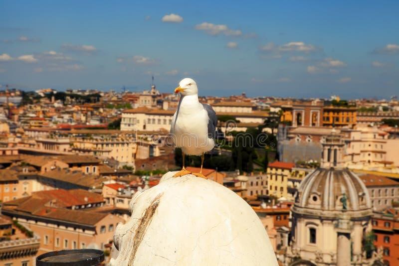 Rome Italien - April 9, 2017: Gataterrass framme av Caen royaltyfri bild