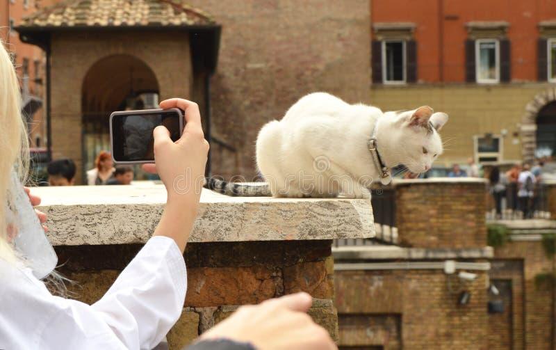 Rome Italien-Oktober 07, 2018: flicka som tar bilder på hennes gulliga vita katt för smartphone som sitter på plazaen Largo Di To arkivfoton