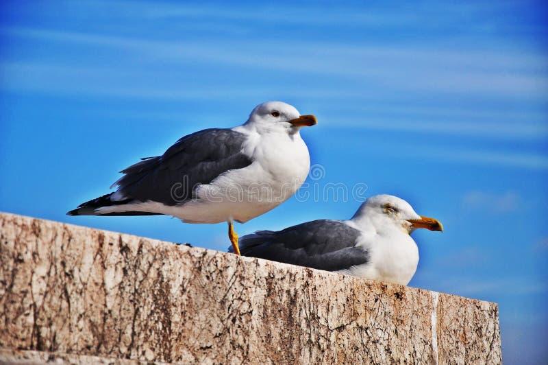 Rome Seagull stock image