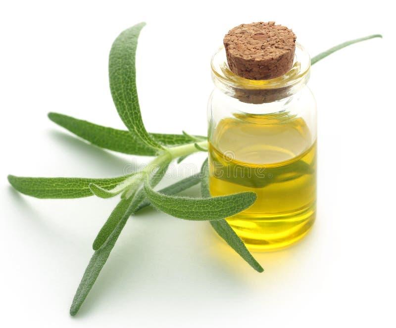 Romero orgánico fresco con aceite esencial imagen de archivo