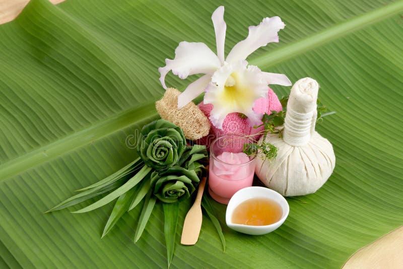 Romig Vers Herb Mask - Omslag Pandanus Palm, Ivy Gourd en honing, kuuroord met natuurlijke ingrediënten van Thailand stock foto's