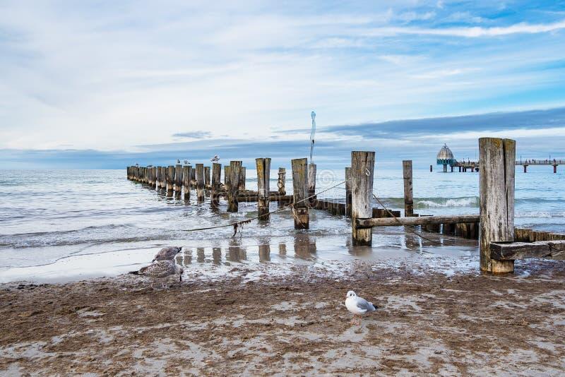 Rompeolas en la costa de mar Báltico en Zingst, Alemania foto de archivo libre de regalías
