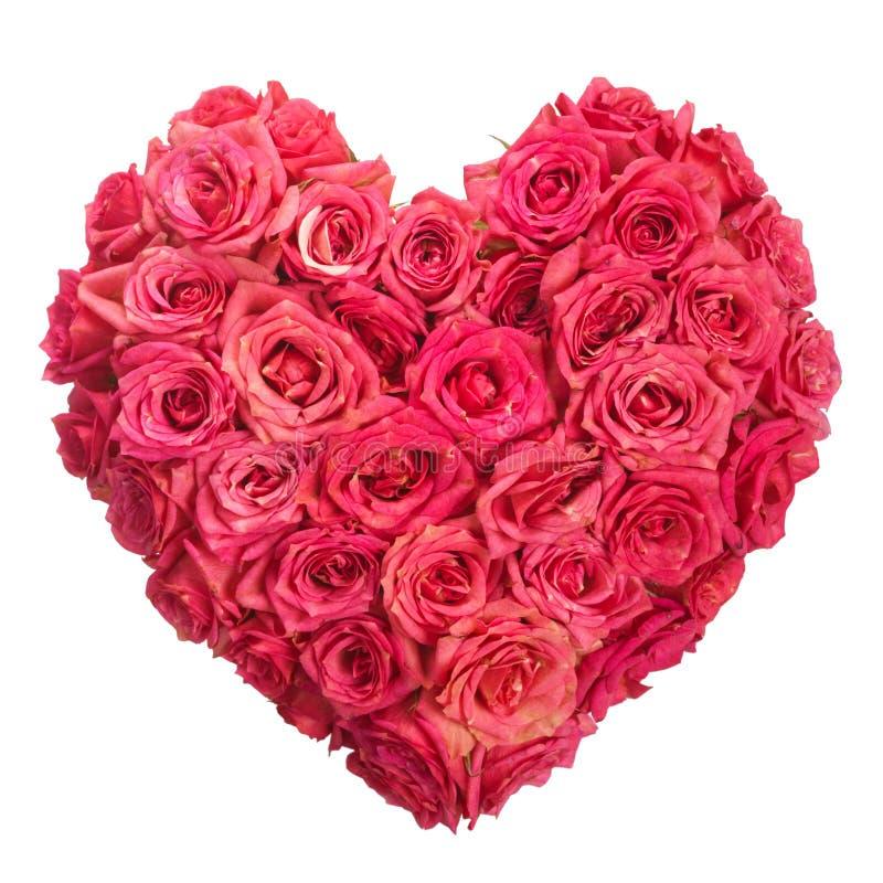 Ron blommar hjärta över vit. Valentin. Förälskelse royaltyfri bild