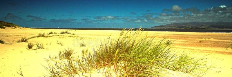 Download Ronan Point stock foto. Afbeelding bestaande uit grassen - 10779642
