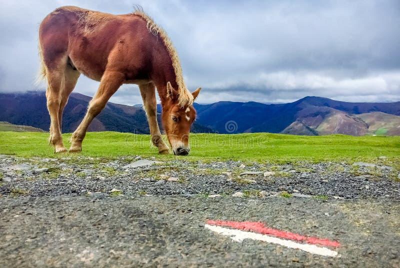 Roncesvalles, Spanien - Wild Mountain Horse Grazing from the Way of St James Camino de Santiago lizenzfreies stockfoto