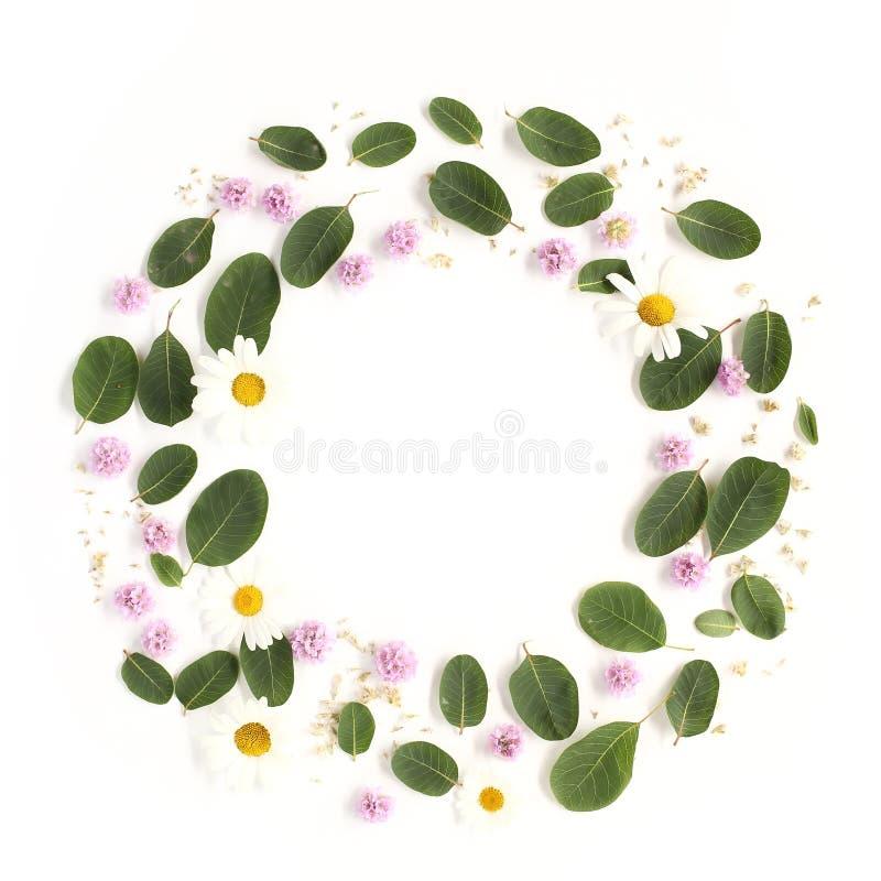 Rond bloemendiekader van roze bloemen wordt gemaakt, chamomille bloemen royalty-vrije stock foto's