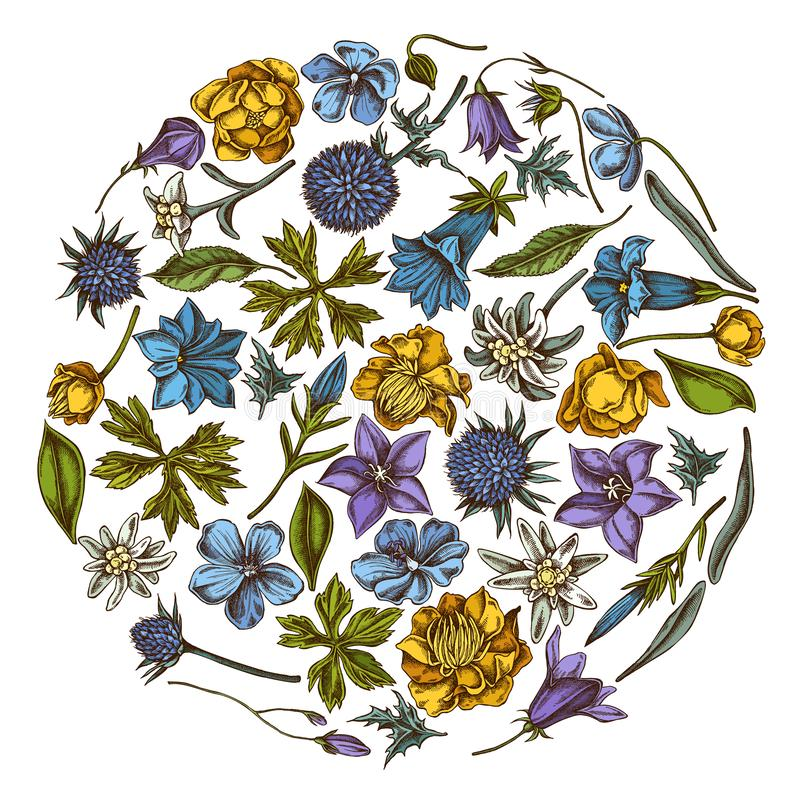 Rond bloemenontwerp met gekleurd bellflower, edelweiss, globethistle, globeflower, gentiana weidegeranium, vector illustratie