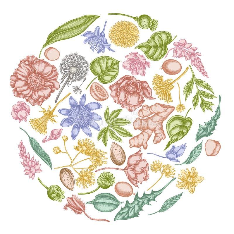 Rond bloemenontwerp met pastelkleuramandel, paardebloem, gember, papaverbloem, hartstochtsbloem, tiliacordata royalty-vrije illustratie
