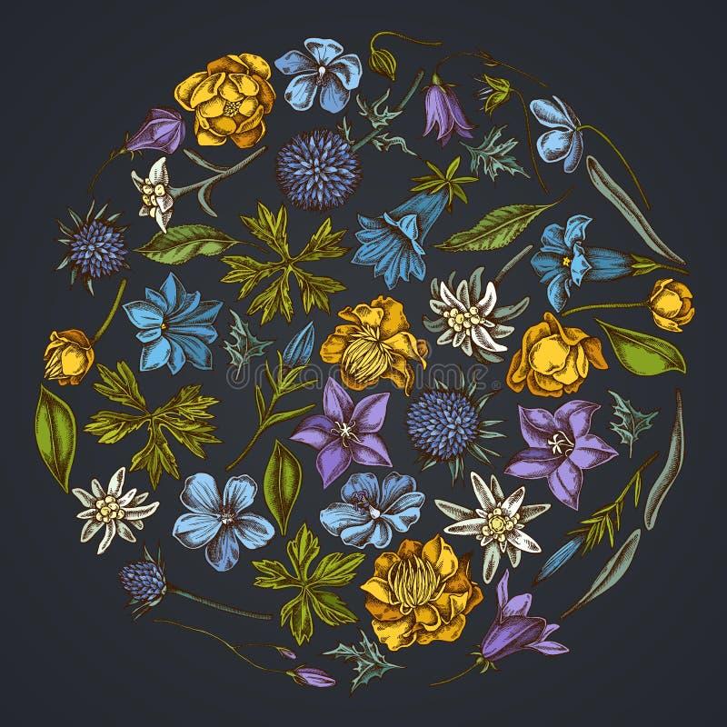 Rond bloemenontwerp op donkere achtergrond met bellflower, edelweiss, globethistle, globeflower, gentiana weidegeranium, royalty-vrije illustratie