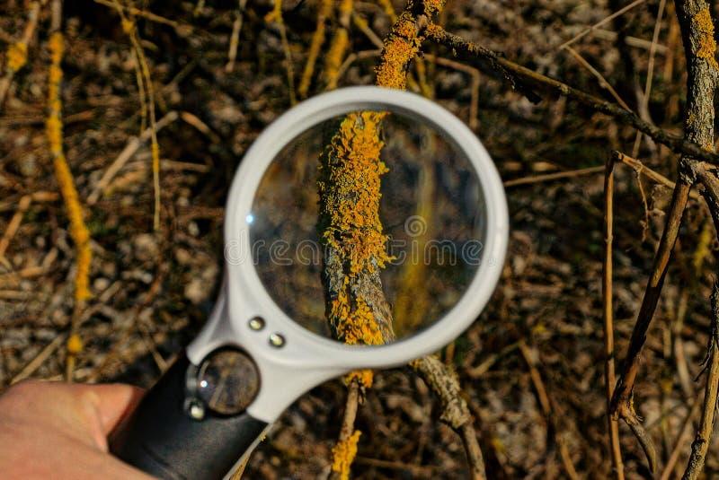 Rond meer magnifier verhogingen bruin mos op een boomtak stock fotografie