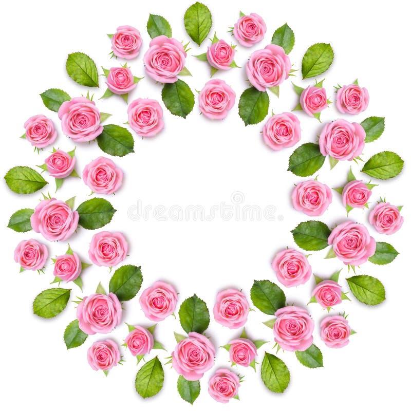 Rond ramkrans som göras av isolerade rosa rosor på vit backgroun royaltyfria foton
