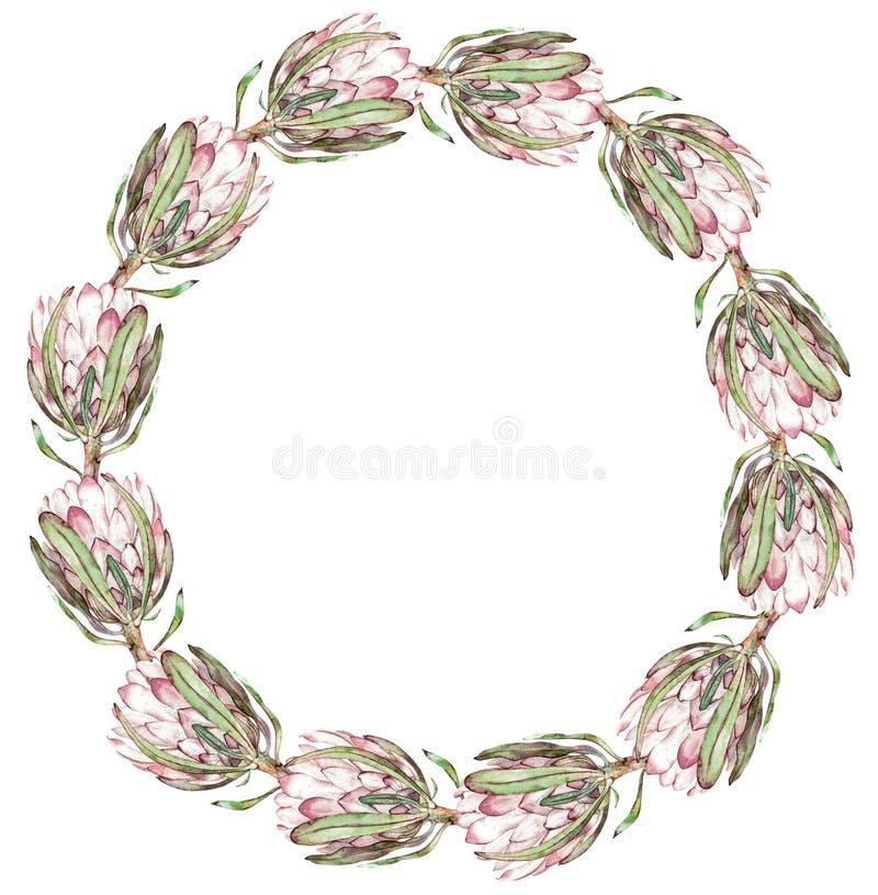 Rond roze proteakader Waterverf exotische bloemenillustratie stock illustratie