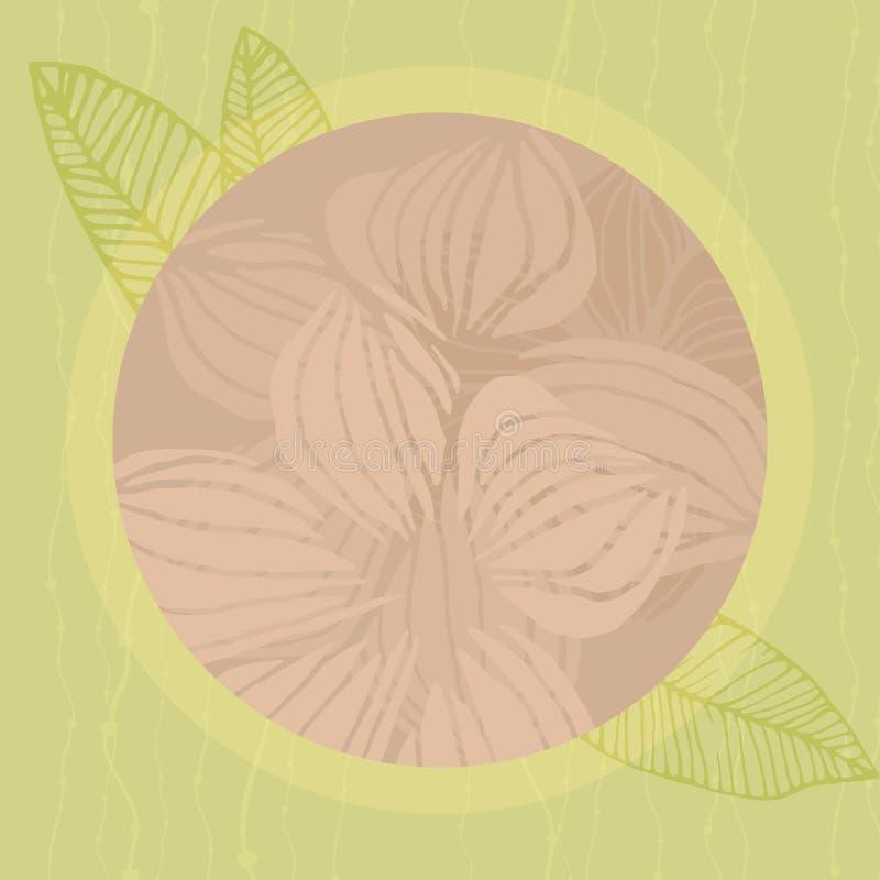 Rond tropisch kader, natuurlijk exemplaar ruimteontwerp met plumeriabloem stock illustratie