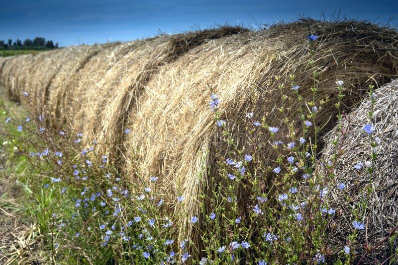 Ronde balen Hay in Grass Field stock foto