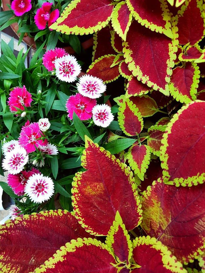 Ronde bloemen en kleurrijke bladeren stock afbeelding