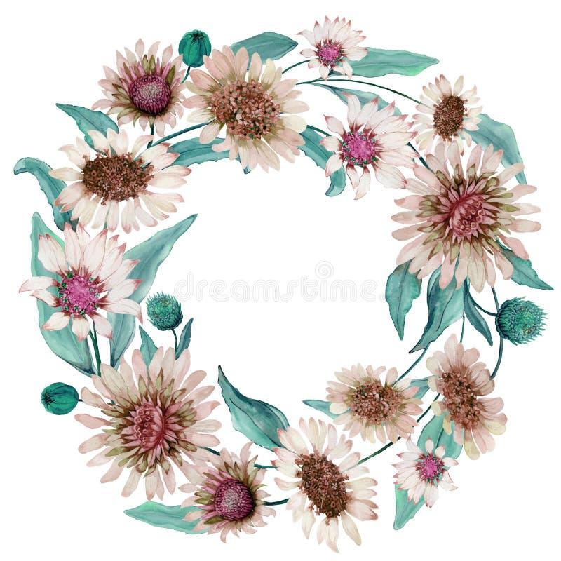 Ronde Bloemengrens Mooie beige madeliefjebloemen met groene bladeren op witte achtergrond Waterverf het schilderen in pastelkleur stock illustratie