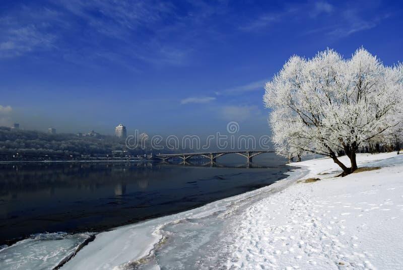 Ronde, pluizige, solitaire boom tegen de blauwe winter, die zich bevinden stock afbeeldingen