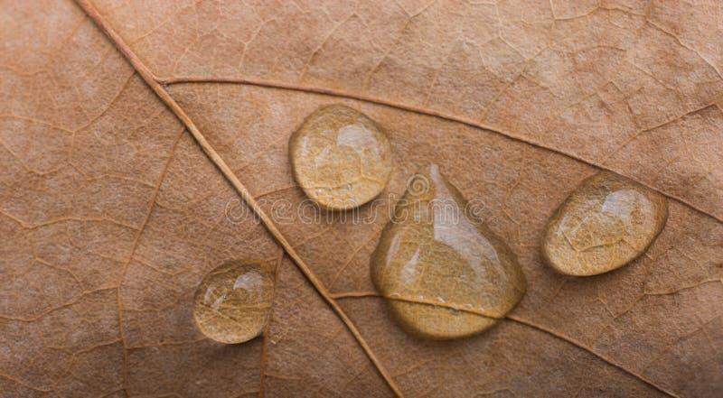 Ronde waterdalingen in close-up op een bladachtergrond stock afbeelding