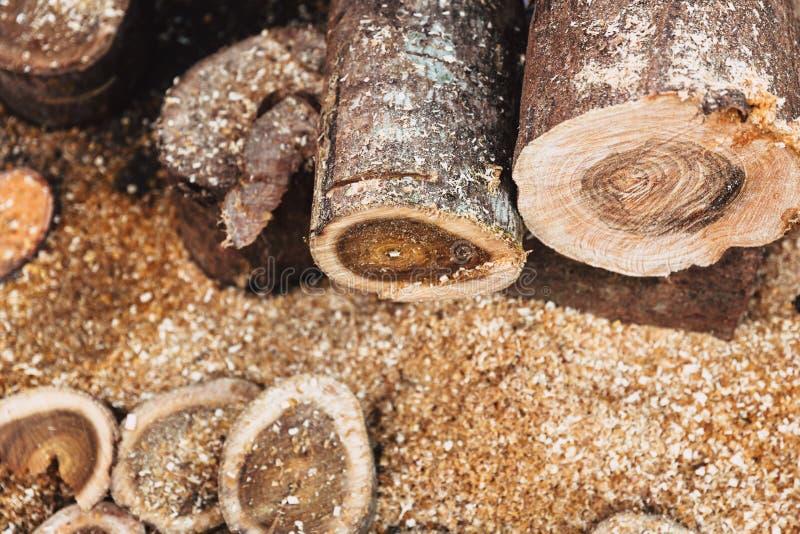 Rondin de coupe en bois par industrie de sylviculture de scierie photo libre de droits