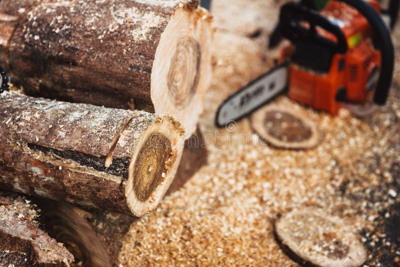 Rondin de coupe en bois par industrie de sylviculture de scierie photographie stock libre de droits