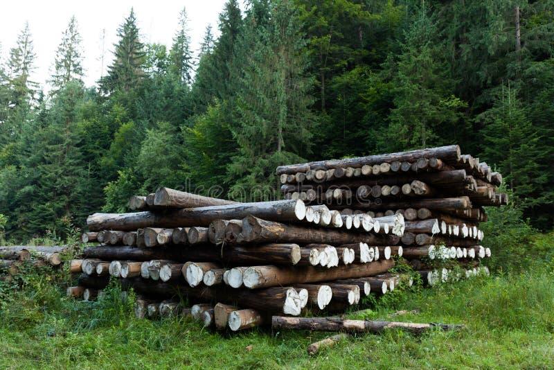 Rondin en bois, coupe d'arbre dans le pin de for?t dans la pile photos libres de droits