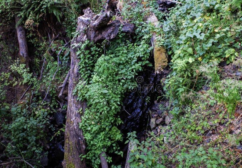 Rondin tombé, Eagle Creek, gorge de Colombie, Orégon photographie stock libre de droits