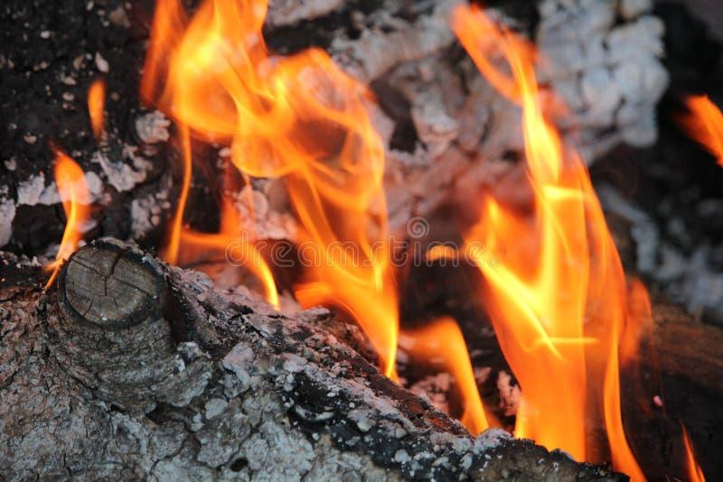 Rondins brûlants avec les flammes nues photos stock