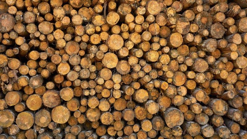 Rondins coupés secs d'arbre empilés sur l'un l'autre photos stock