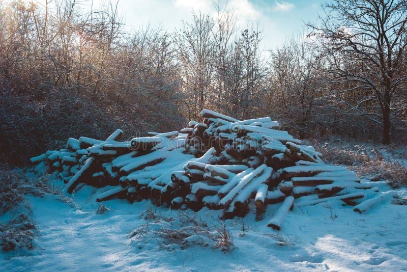 Rondins couverts par neige empilés dans la forêt sur Sunny Day photographie stock