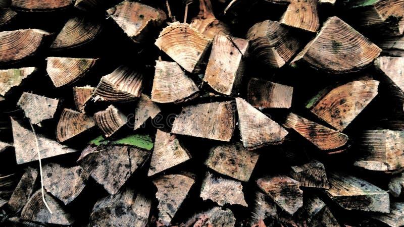 Rondins d'arbre photographie stock libre de droits