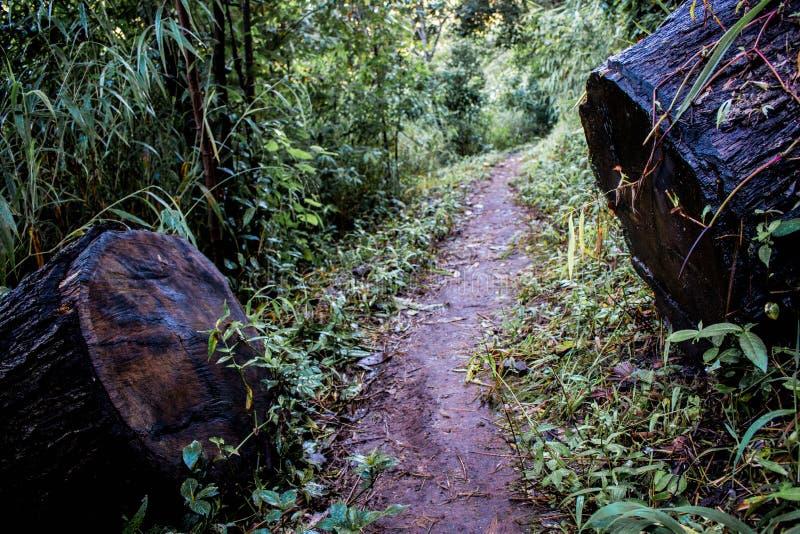 Rondins distincts bois de construction, moitié de bois brun sur le chemin dans la forêt humide image libre de droits
