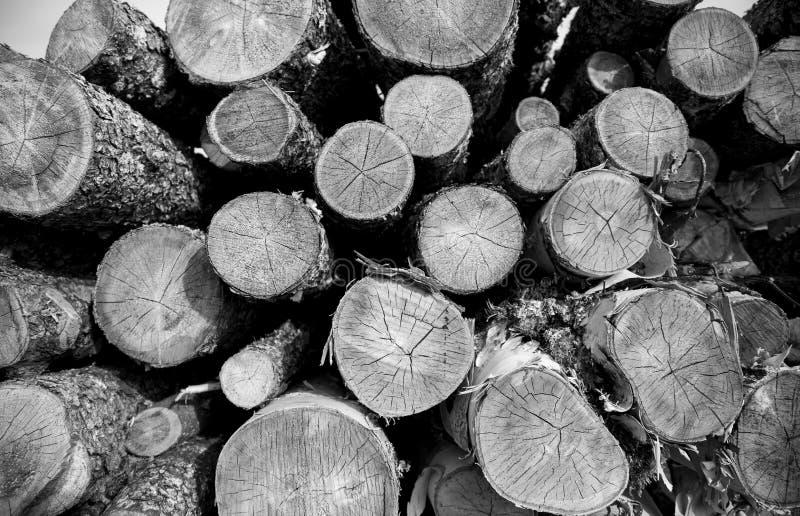 Rondins en bois photos stock