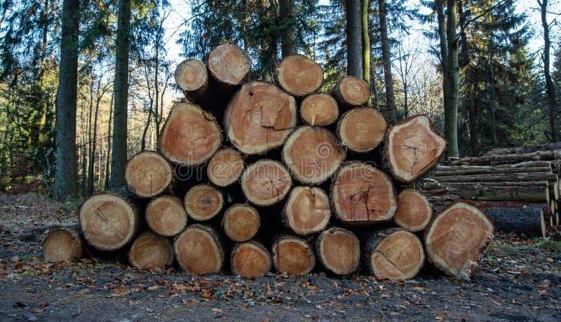 Rondins en bois avec la forêt sur le fond Troncs des arbres coupés et empilés dans le premier plan photo libre de droits