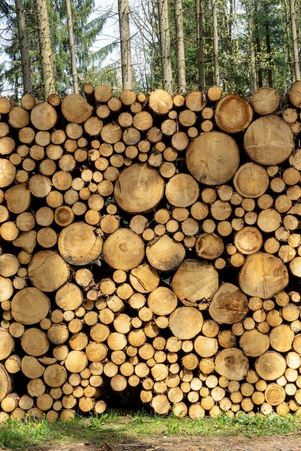 Rondins en bois avec la for?t sur le fond Troncs des arbres coup?s et empil?s dans le premier plan image libre de droits