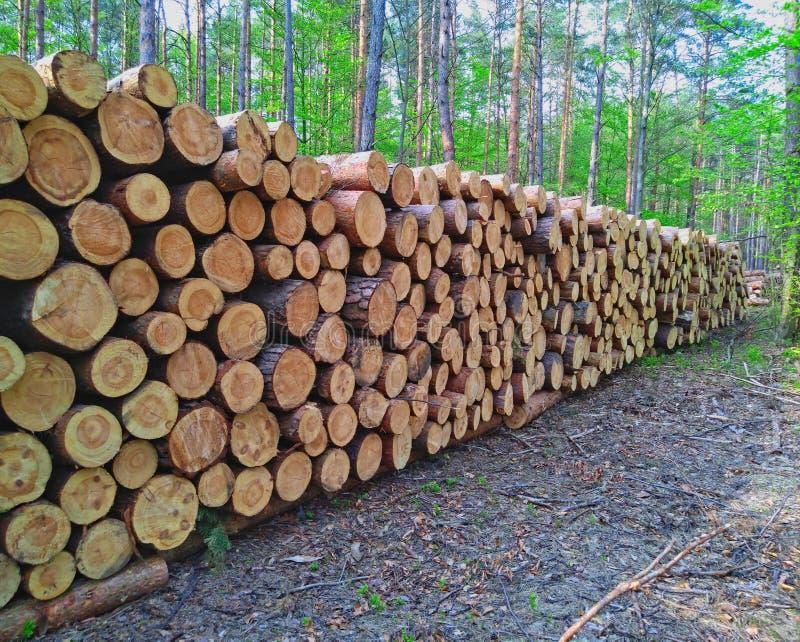 Rondins en bois des bois de pin dans la forêt image libre de droits