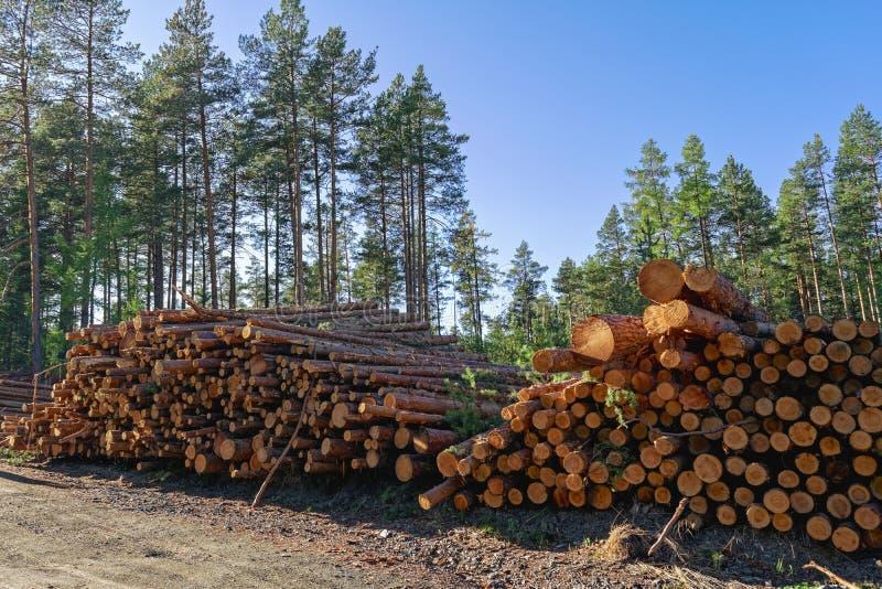 Rondins en bois des bois de pin dans la forêt, empilés dans une pile photos stock