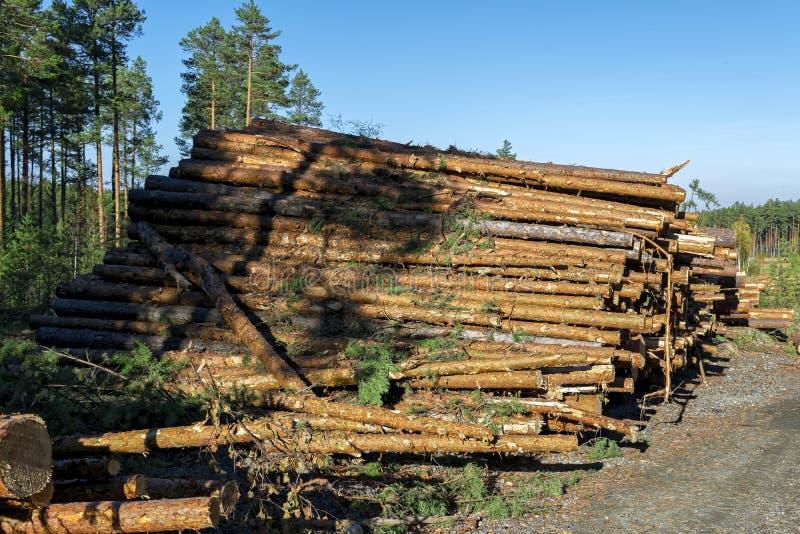 Rondins en bois des bois de pin dans la forêt, empilés dans une pile images stock