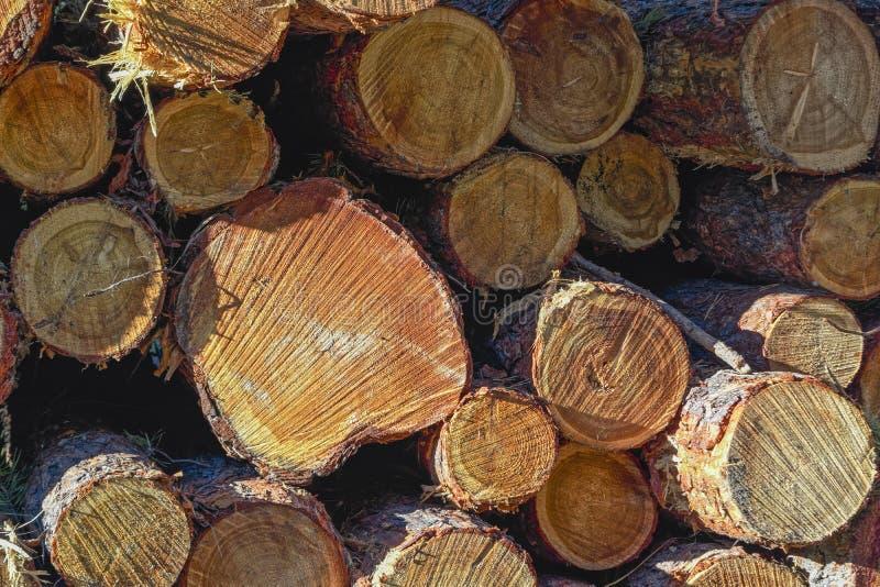 Rondins en bois des bois de pin dans la forêt, empilés dans une pile photographie stock libre de droits